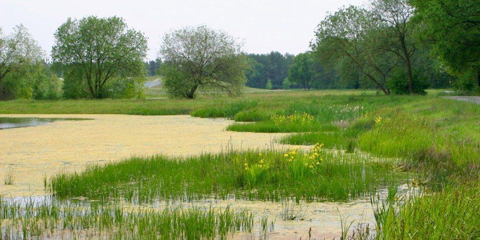 Inheemse zaden voor duurzame biodiversiteit, Biodivers BV