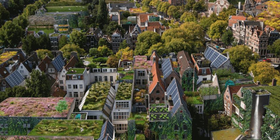 Rooftop Revolution wil dak-natuurgebied in Nederland