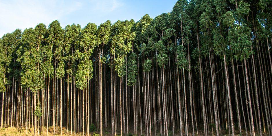 Input nodig voor duurzame processen houtsector Brazilië