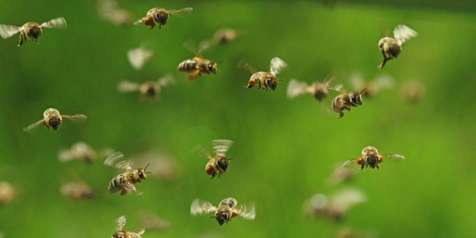 Bijenplekken langs A5 Amsterdam-West